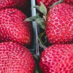 nutricion ayurveda - terapias alternativas alcobendas